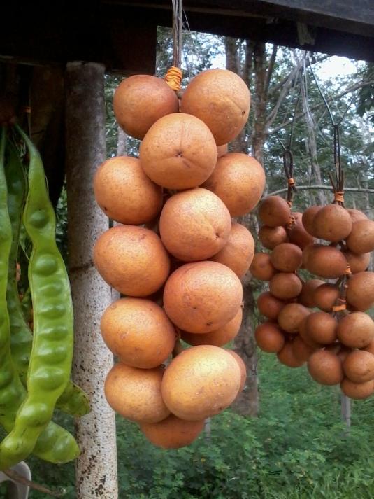 buah tampoi